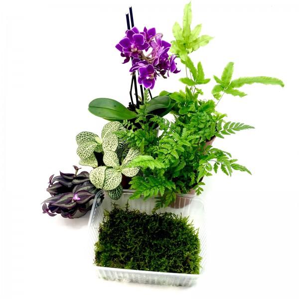 biOrb Air60 premium Flower Pflanzenset