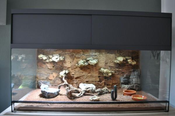 Design Terrarium