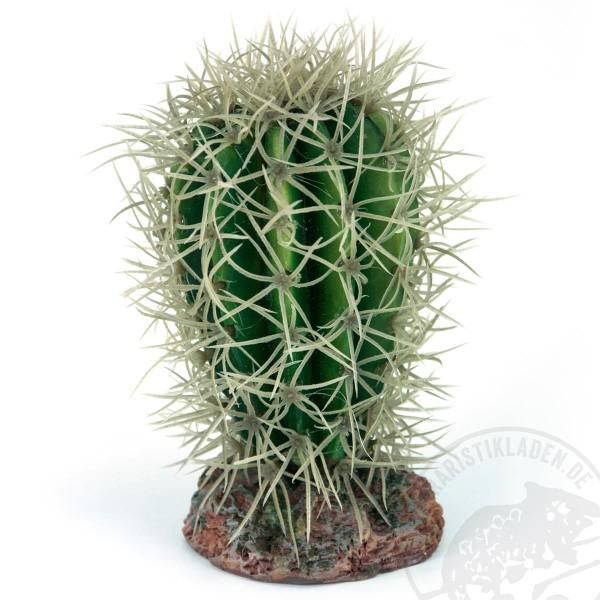 Great Basin Kaktus für Wüstenterrarien