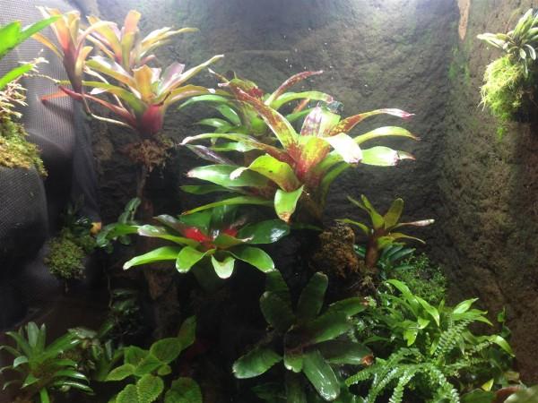 Frosch Terrarium