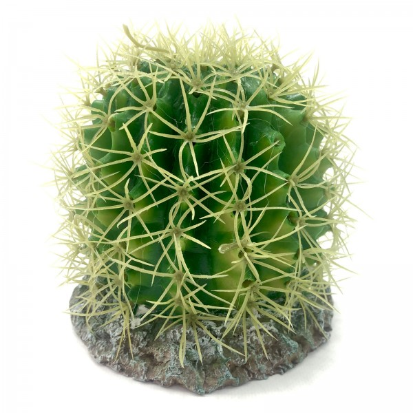 Hobby Kaktus Sonora
