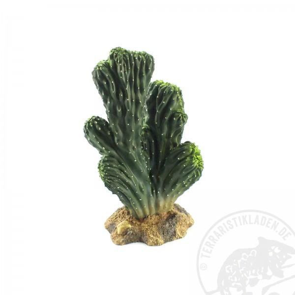 Hobby Kaktus Victoria 1