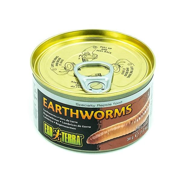 Earthworms Regenwürmer