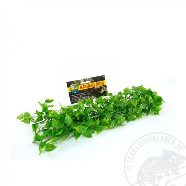 Zoo Med Natural Bush Mexican Philo