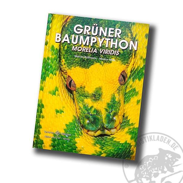 Grüner Baumpython Morelia viridis