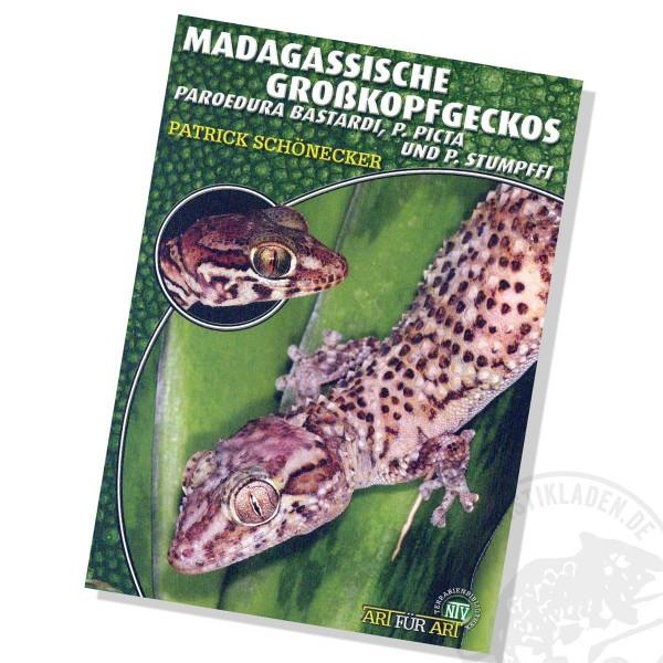 Art für Art - Madagassische Großkopfgeckos (Paroedura bastardi, P. picta und P. stumpffi)