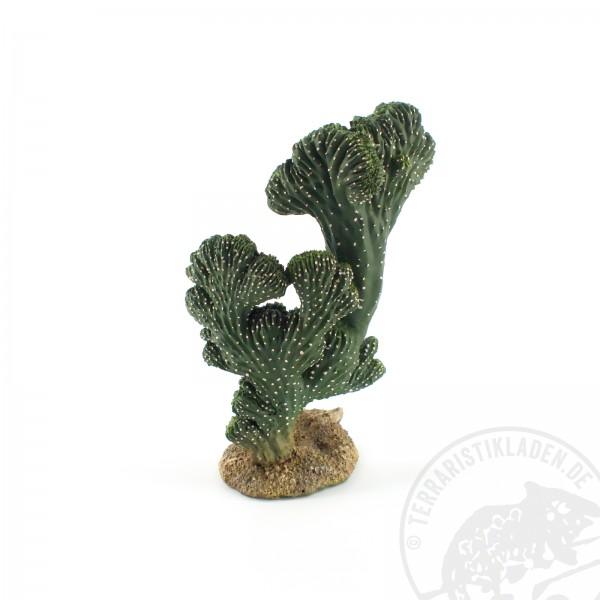 Hobby Kaktus Victoria 2