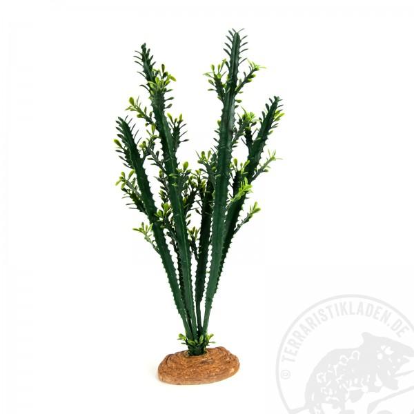 Terrarienpflanze Euphorbia L