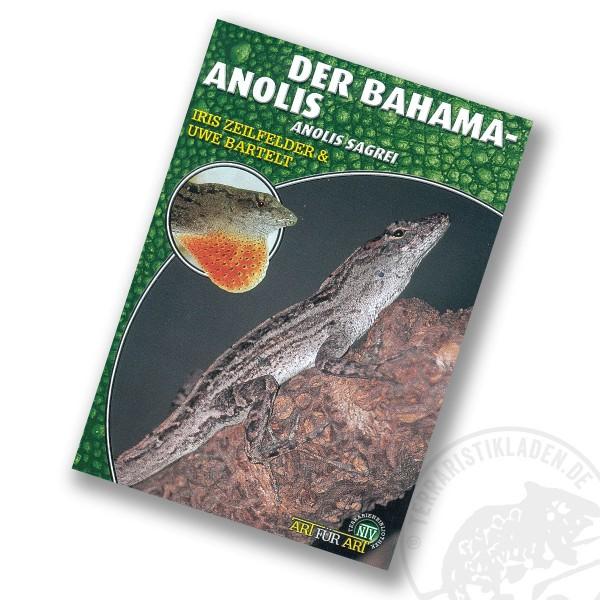 Art für Art Der Bahama-Anolis