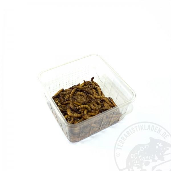 Schwarzkäferlarve Zophobas morio